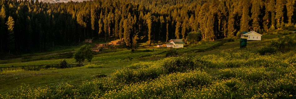 The green meadows of Yusmarg in Kashmir are in full bloom in summer, carpeted by yellow flowers with several nature trails leading to the surrounding forests and snow capped Himalayas and rustic picturesque wooden cottages that provide accommodation to the tourists.